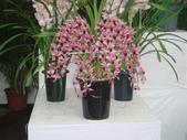 YR08 花卉展:1589792845.jpg