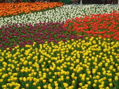 YR08 花卉展:1589792852.jpg