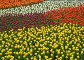 YR08 花卉展:1589792853.jpg