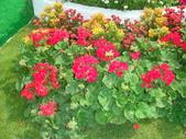 YR08 花卉展:1589792828.jpg