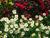 YR08 花卉展:1589792829.jpg