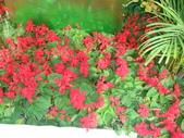 YR08 花卉展:1589792830.jpg