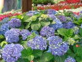YR08 花卉展:1589792831.jpg