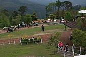 【98.04.11綠光森林 下午茶 】:IMG_5267.JPG