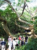 柴山鳳凰展翅大猴洞 2012-10-06 :zDSCN6153 鳳凰展翅.jpg
