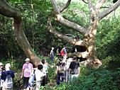 柴山鳳凰展翅大猴洞 2012-10-06 :zDSCN6154 鳳凰展翅.jpg