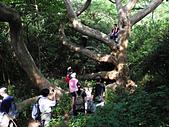 柴山鳳凰展翅大猴洞 2012-10-06 :zDSCN6157 鳳凰展翅.jpg