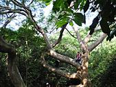 柴山鳳凰展翅大猴洞 2012-10-06 :zDSCN6158 鳳凰展翅.jpg