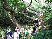 柴山鳳凰展翅大猴洞 2012-10-06 :zDSCN6152 鳳凰展翅.jpg