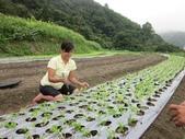美莉美麗:田園種菜1.jpg