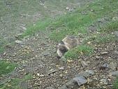 200807日月潭員工旅遊:DSC05948.jpg