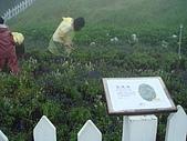 200807日月潭員工旅遊:DSC05949.jpg