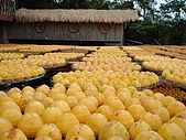 新竹海岸線&吃道地美食:一盤一盤的柿子