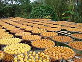 """新竹海岸線&吃道地美食:因為這裡有名的""""九降風""""讓柿餅更好吃"""