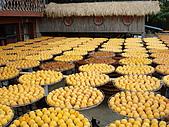 新竹海岸線&吃道地美食:這對我們來說是粉新奇的