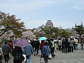 日本賞櫻第二天(0412國寶姬路城):日本賞櫻之旅 21