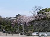 日本賞櫻第二天(0412國寶姬路城):日本828之旅 087.