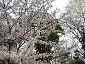 日本賞櫻之倉敷觀龍寺:日本賞櫻之旅 12