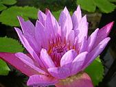 吳哥窟之旅(2005.09.22):蓮花