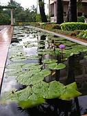 吳哥窟之旅(2005.09.22):蓮花池