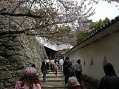 日本賞櫻第二天(0412國寶姬路城):日本賞櫻之旅 23