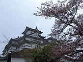 日本賞櫻第二天(0412國寶姬路城):日本828之旅 095.