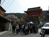 日本賞櫻第三天:日本賞櫻之旅 34