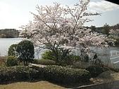 2008日本賞櫻之旅(0411倉敷美觀地區):車上隨手拍