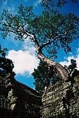 吳哥窟之旅(2005.09.21):從巨石堆裡蹦出來的巨木