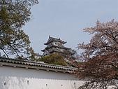 日本賞櫻第二天(0412國寶姬路城):日本828之旅 102.