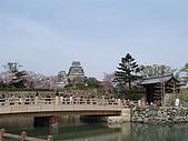 日本賞櫻第二天(0412國寶姬路城):日本828之旅 104.