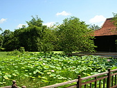 吳哥窟之旅(2005.09.22):池塘
