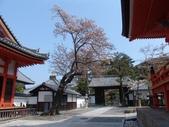 日本賞櫻第三天:日本828之旅 105.