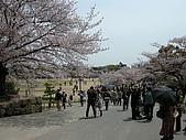 日本賞櫻第二天(0412國寶姬路城):日本賞櫻之旅 30