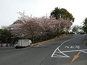 日本賞櫻之倉敷觀龍寺:飯店前賞櫻