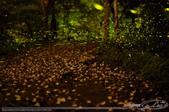 夏夜精靈:LEO_5603-1.jpg