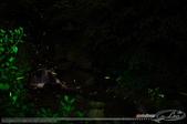 夏夜精靈:LEO_5521-1.jpg
