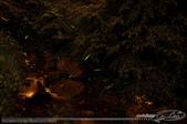 夏夜精靈:LEO_5526-1.jpg