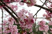 恩愛農場賞櫻:2017-03-18_0013.jpg