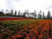 2004北海道:富良野農場花海