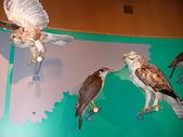 2004北海道:旭川博物館裡