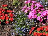 2004瑞士遊(一陽):日內瓦花園裡  奼紫嫣紅