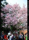 2015 天元宮花見:20150318015.jpg