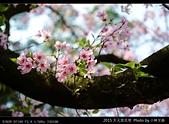 2015 天元宮花見:20150318012.jpg