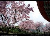 2015 天元宮花見:20150318026.jpg