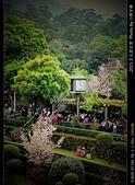 2015 天元宮花見:20150318057.jpg