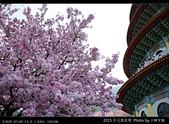 2015 天元宮花見:20150318019.jpg