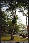 桃園大溪老街:DSC_0126_nEO_IMG.jpg