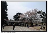 080405 新宿御苑 櫻花樹下野餐:DSC_1851.jpg