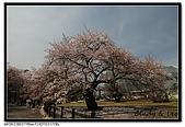 080405 新宿御苑 櫻花樹下野餐:DSC_1853.jpg